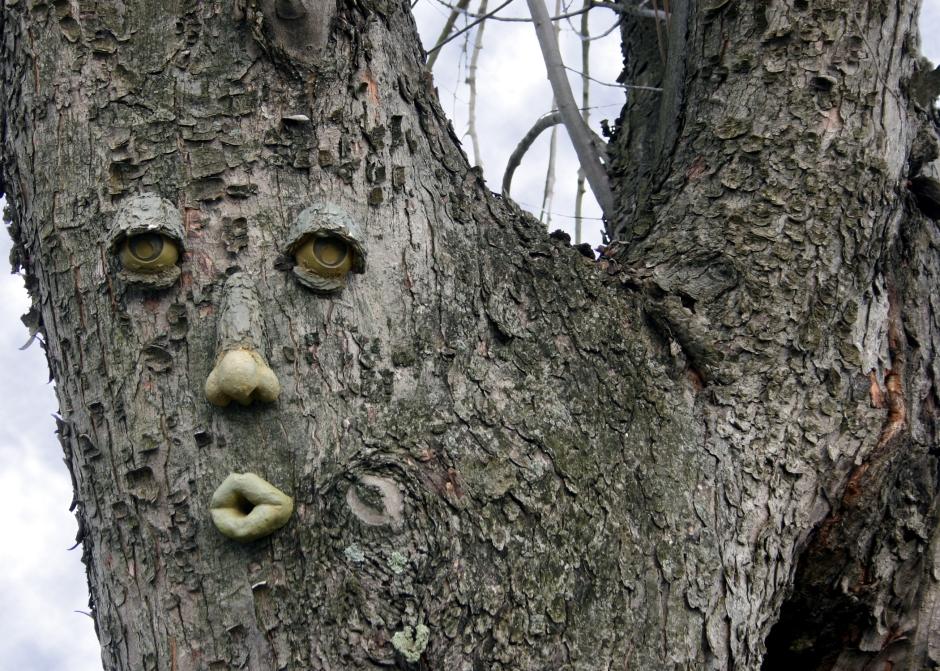 tree_face